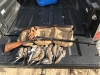 Frank Clark's dove hunt with German 28 ga 17-10-19 2