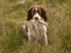 henry-eggs-dog
